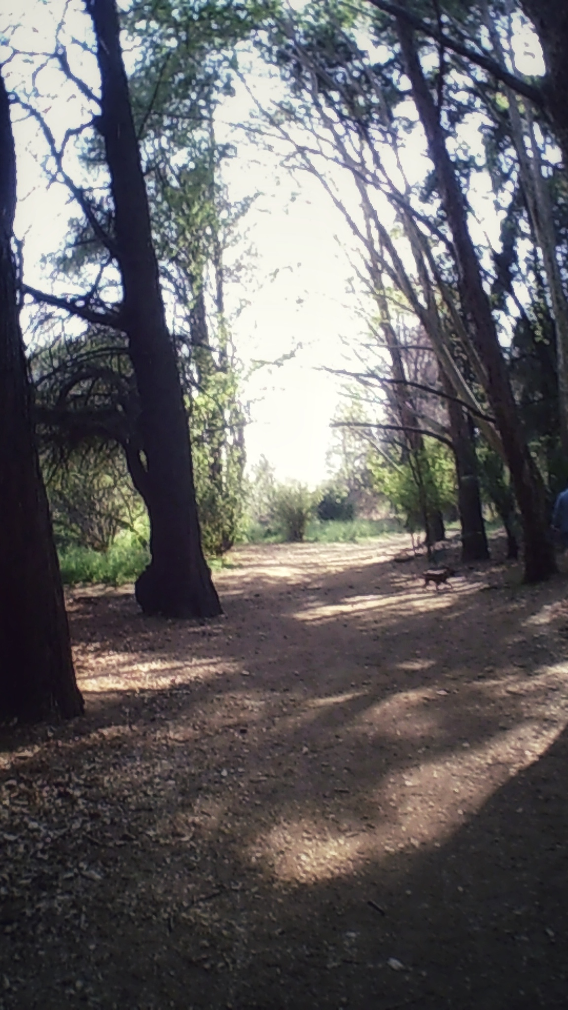 My favourite part in Emmarentia park. Or one of my favourite parts